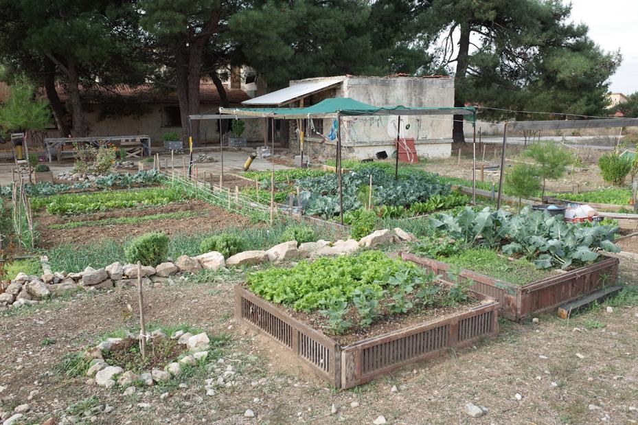 Erstes, selbstorganisiertes Biogartenkollektiv auf dem ehemaligen Militärgelände Karatasou, ausserhalb von Thessaloniki