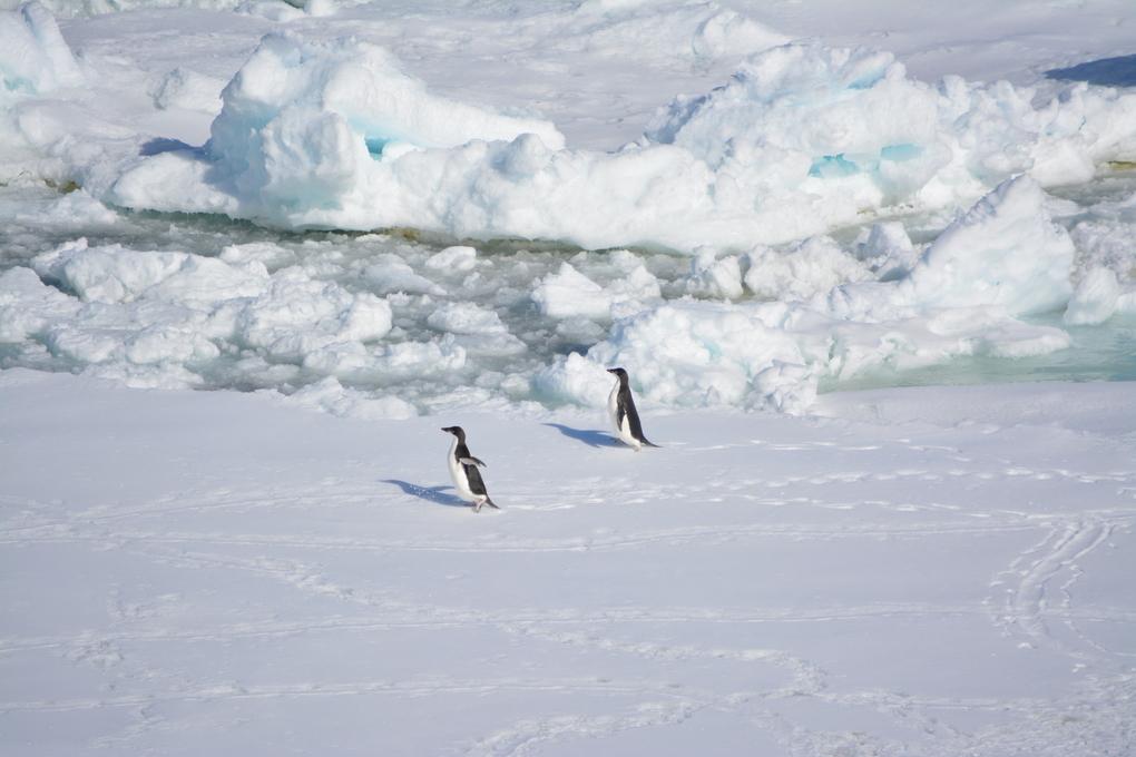 polar reise auf forschungsschiff