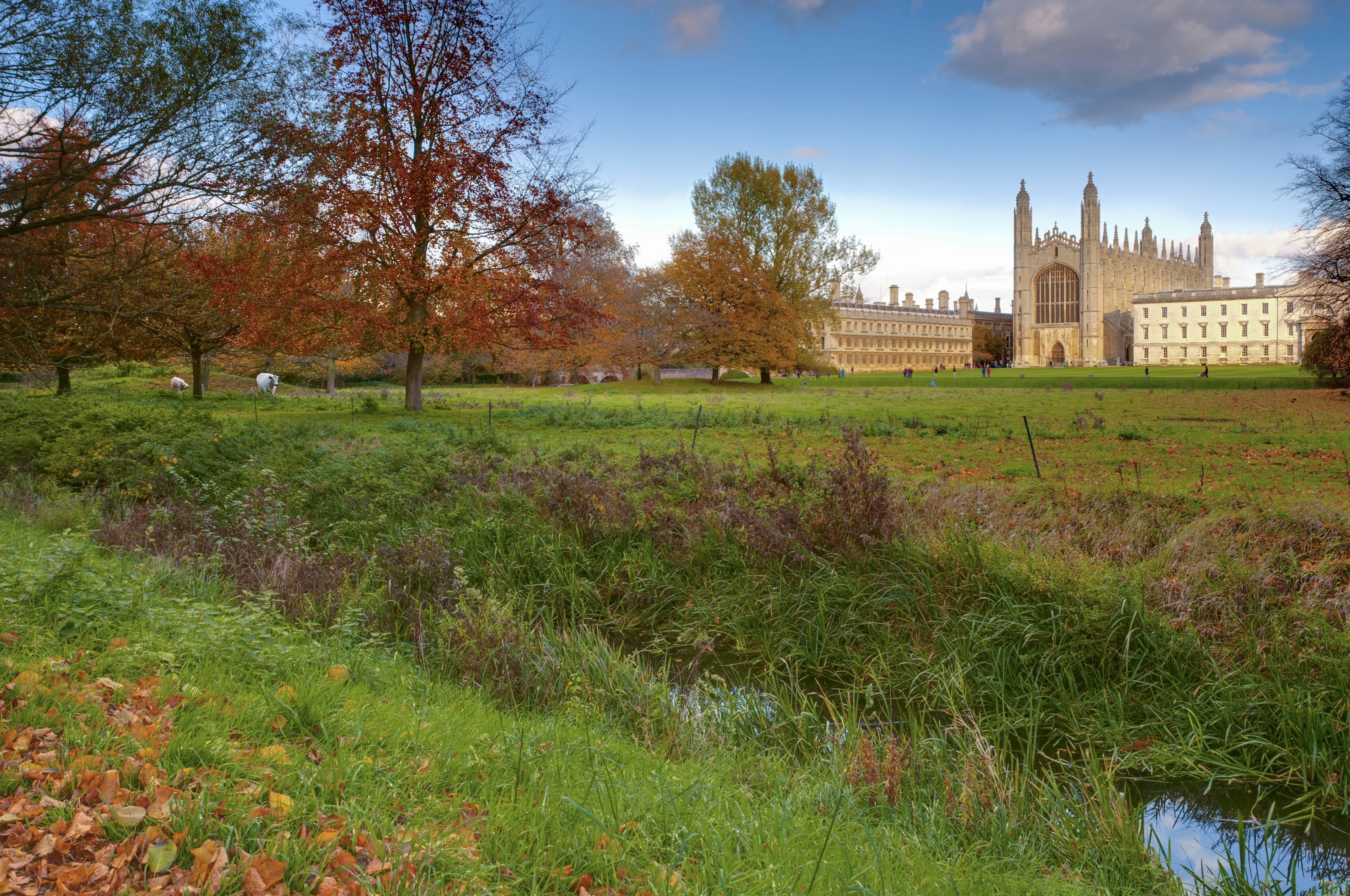 Grüne Wiesen, Schafe und gotische Mauern: Die Universität Cambridge, wie man sie sich in Hollywood vorstellt.