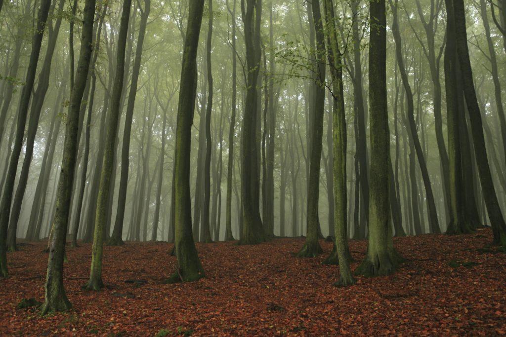bäume kommunizieren untereinander
