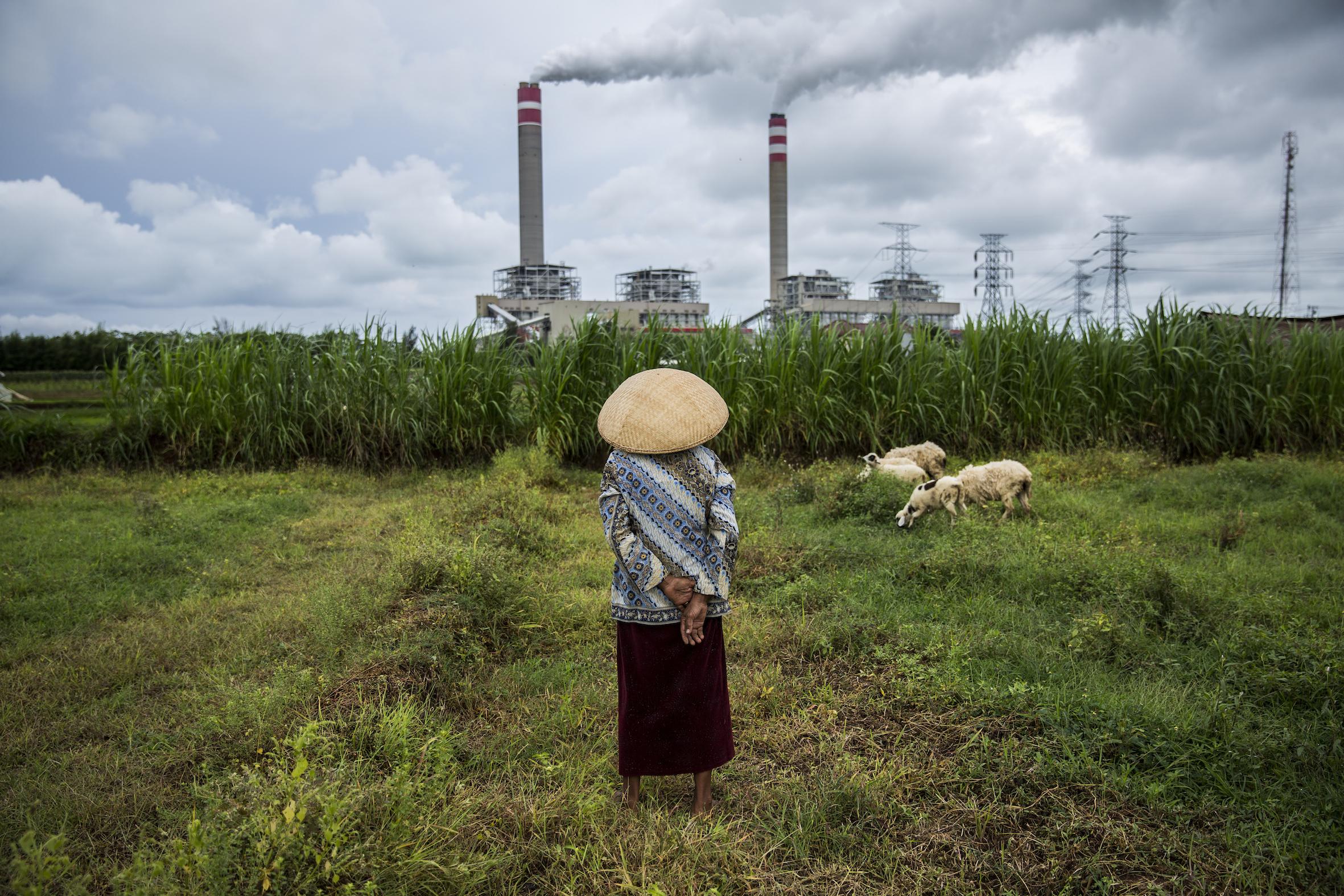 """Schaf trifft Schlot: Jufris Serie """"Fragile Bond"""" fragt sich, wie Indonesier mit der Natur umgehen."""