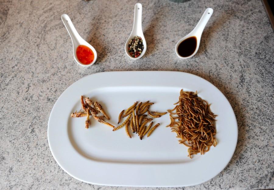Heuschrecken, Larven und Mehlwürmer: Würden Sie das etwa essen?