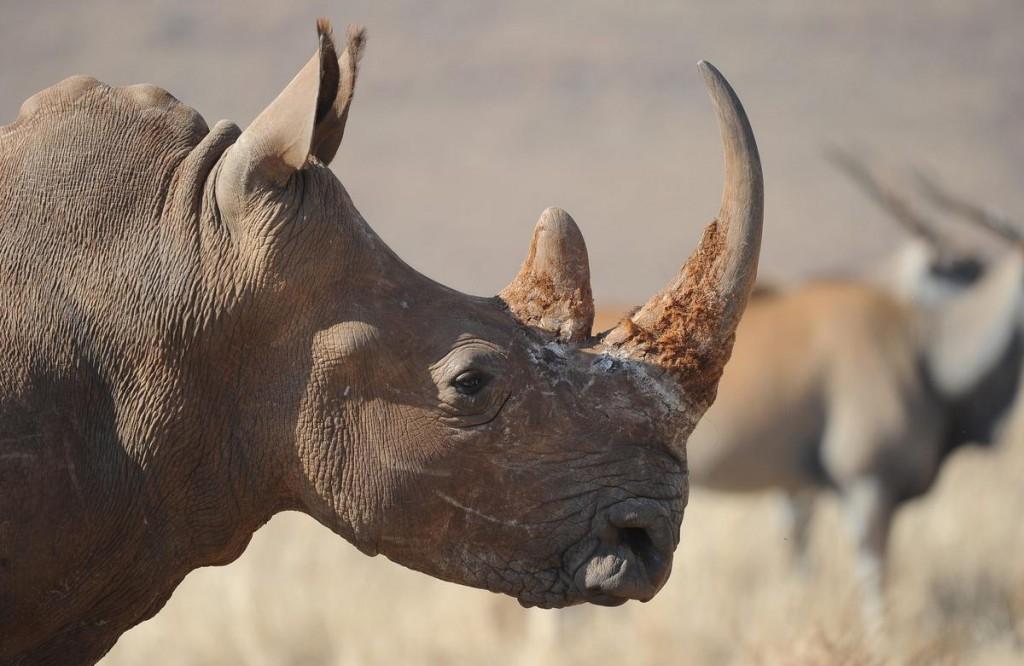 Dem Rhinozeros-Horn selbst sieht man nicht an, ob es legal gehandelt ist.
