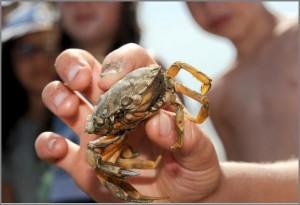 Krabbe05.05