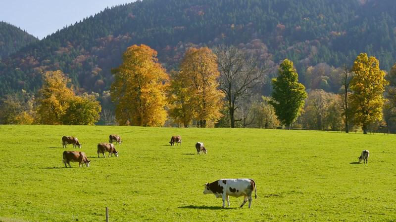 Humansteuernder Klimaschutz mit dem Kreuzbergalm-Plan - Stützen der ...