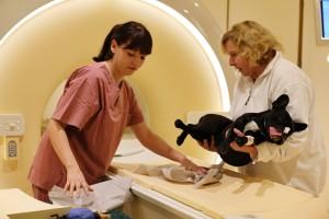 Hund im 3-Tesla-Tomographen: Szene an einer deutschen Universitätskleintierklinik