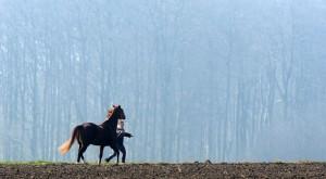 pferde frauen sprüche