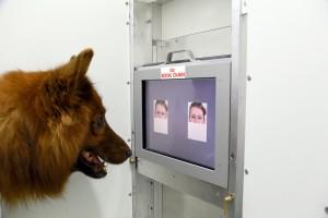 Der Testhund erkennt Gesichtsausdrücke