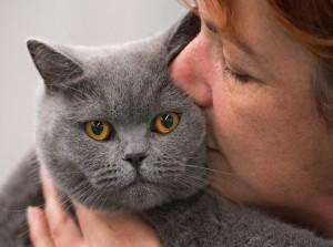 Die Katze: bei den einen Gast im Garten, bei den anderen Familienmitglied