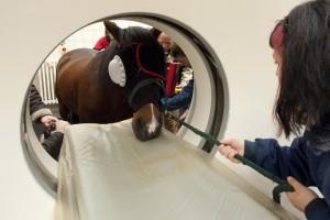 Pferd in der Röhre: Vor allem die Weiterbildung in der hochspezialisierten Pferde- und Kleintiermedizin ist begehrt