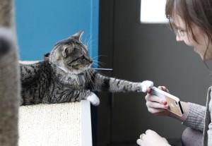 Erster Kontakt in einem New Yorker Katzencafé