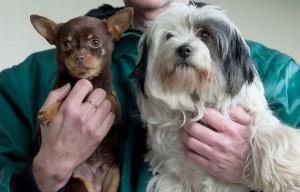 """Chihuahua und Mischling - sie werden gern """"Coco"""" und """"Lucy"""" getauft"""